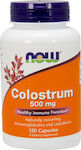 Medium 20180619092746 now foods colostrum 500mg 120 fytikes kapsoules