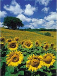 Sunflower Field 1000pcs (16036) Ravensburger